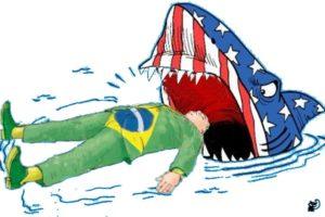 brasil y tiburon blanco USA